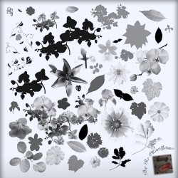 Kit Pinceaux Floral 01 Brushes Psd Scrap'n'Design 6,99 €