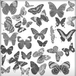 Kit Pinceaux Papillions 01